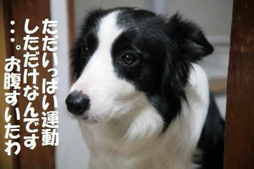 tekotoha_convert_20081229201831.jpg