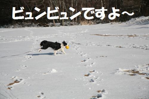 tya---_convert_20090314192519.jpg