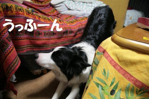 ufu-n_convert_20090105163352.jpg