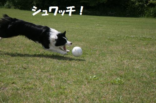 yo-da3_convert_20090623115229.jpg