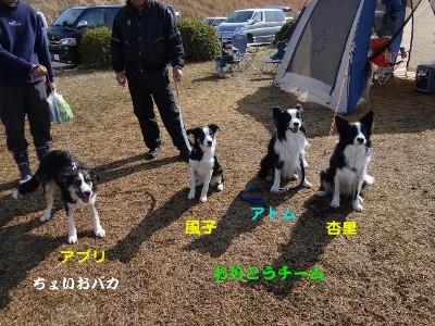 4匹集合磐田