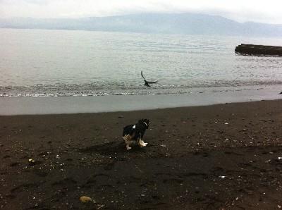 あぷ初めての海