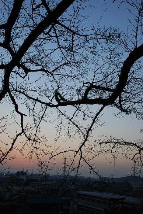 2008-12-30_16-34-23_1.jpg