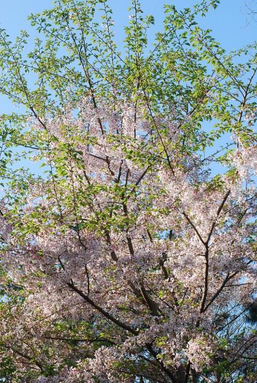 2009-04-10_06-58-39.jpg
