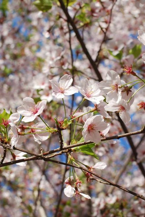 2009-04-10_06-59-58.jpg