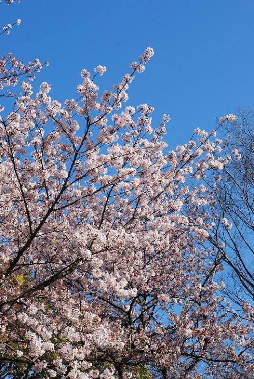 2009-04-10_07-07-03.jpg