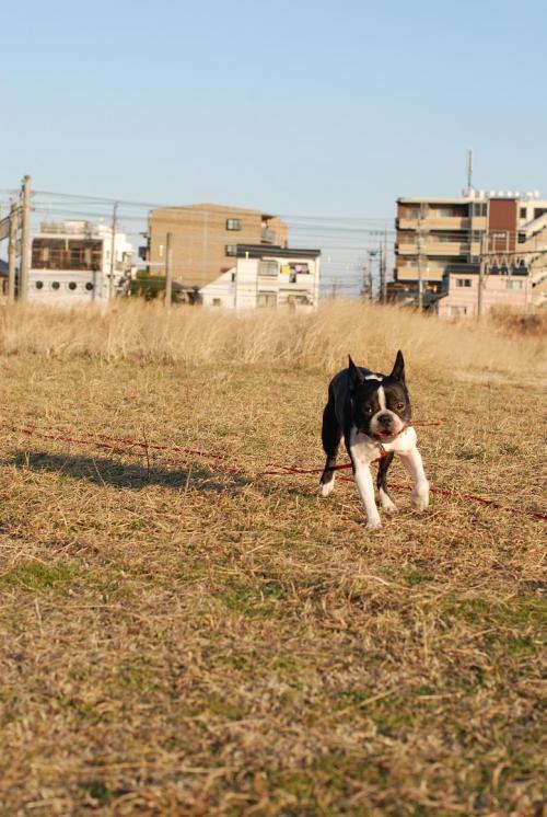 leon (7)