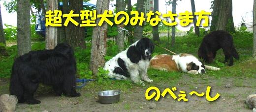 200806_bigdog2.jpg