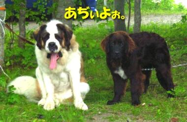 200806_bigdog3.jpg