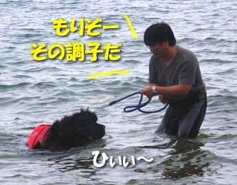 200806_bigdog6.jpg