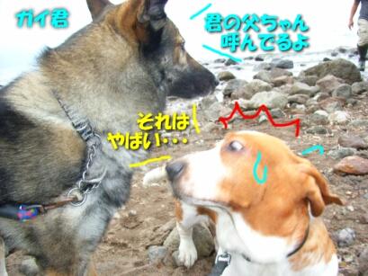 200806_bigdog7.jpg