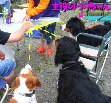 200806_bigdog8.jpg