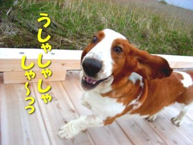 200806_kushiro13.jpg