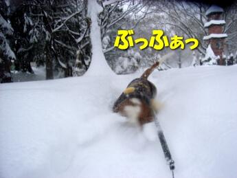 2008_01_oyuki4.jpg