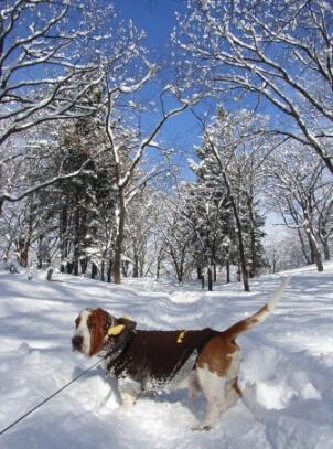 2008_01_snow1.jpg