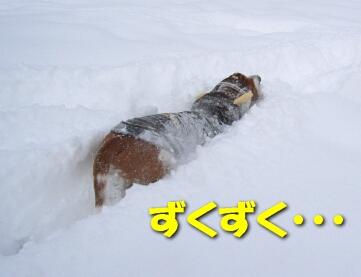 2008_01_snow3.jpg