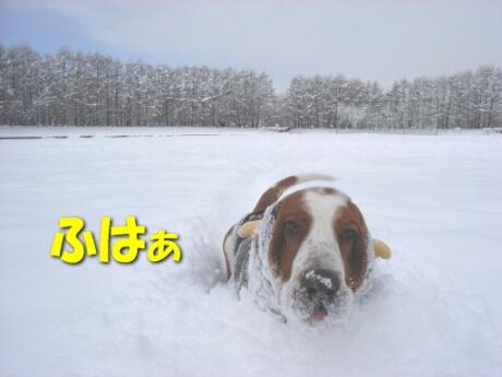 2008_01_snow4.jpg