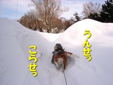 2008_02_snowstorm2.jpg