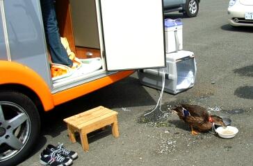 2008_05_camp2.jpg