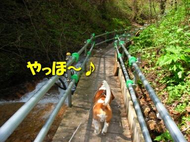 2008_05_mokudo3.jpg