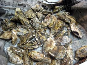 素材 牡蠣