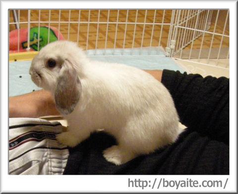 腹乗りウサギ.jpg