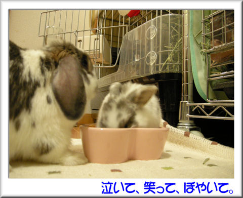 ママとご飯.jpg