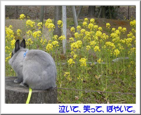 菜の花の前で.jpg