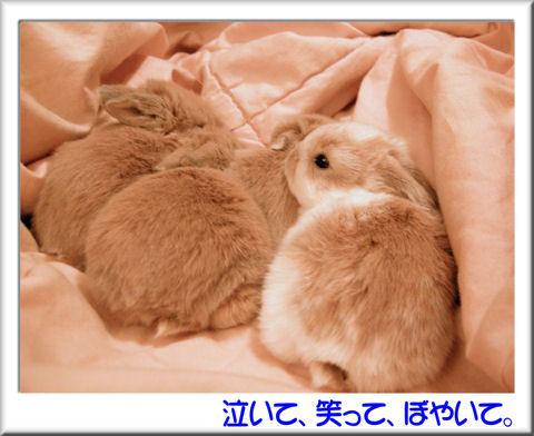 お目目パッチリ.jpg
