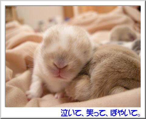 おやすみ~.jpg