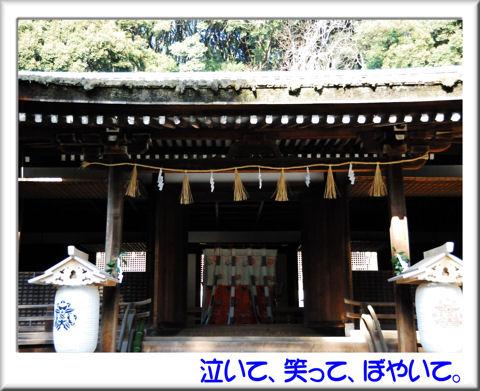 12宇治上神社拝殿.jpg