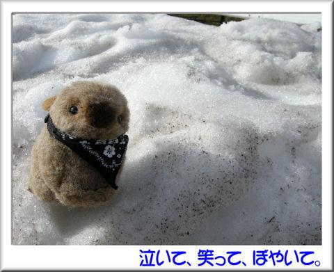 雪と記念写真.jpg