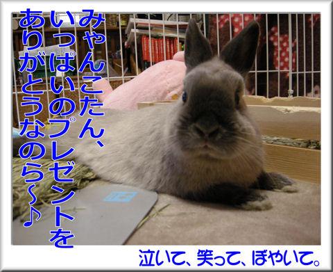 みゃんこさんありがとう!.jpg