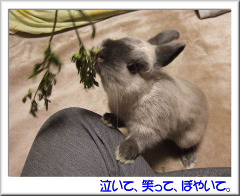 ぷりんママさん02.jpg