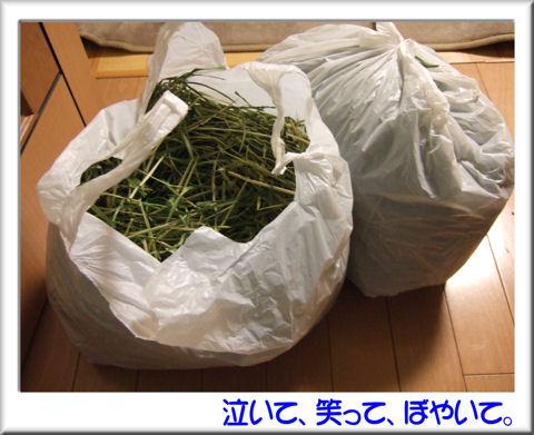 11配布されたウーリーの牧草.jpg