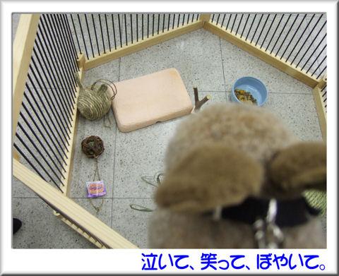 07うさみみボール発見!.jpg