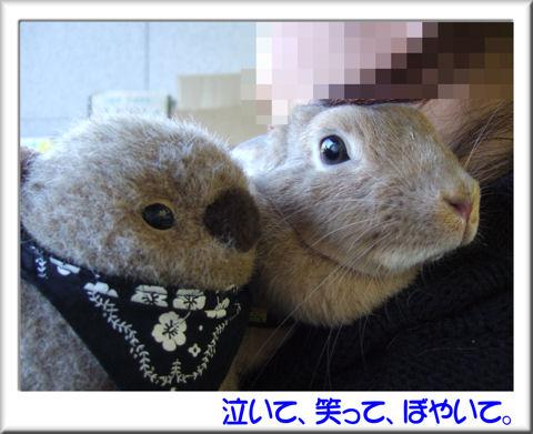 20可愛いのれす.jpg