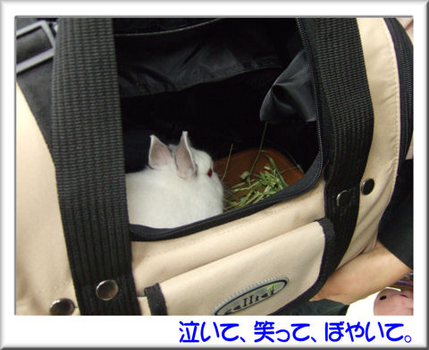 29アロマちゃん.jpg