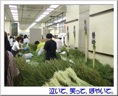 38牧草の無料配布.jpg