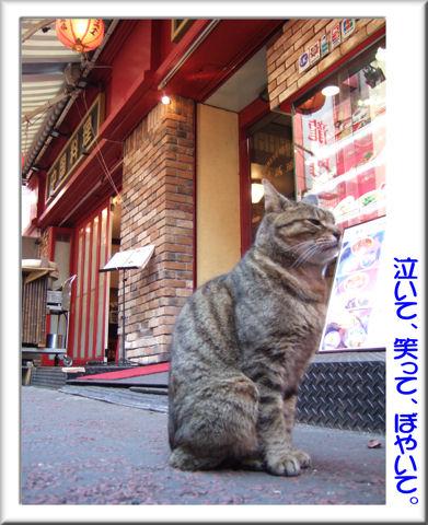 中華街の猫.jpg