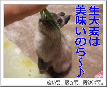 生大麦は美味い!.jpg