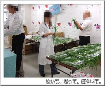 生牧草サンプルプレゼント.jpg