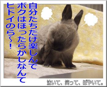 ヒドイのら~!.jpg