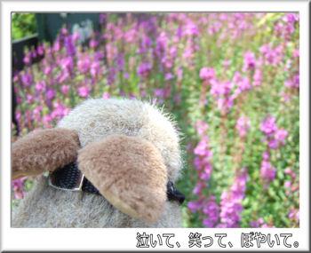 お花がいっぱい.jpg