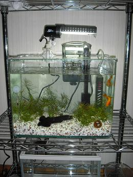 NEW水槽1