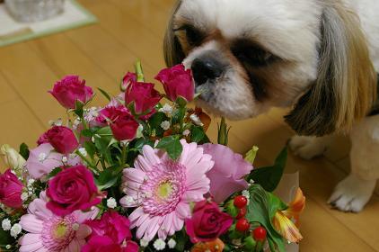 花・ましゃ