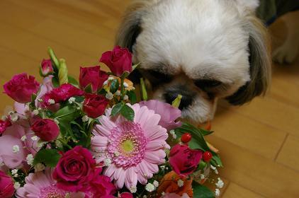 花・ましゃ2