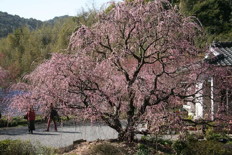 fuji200717.jpg