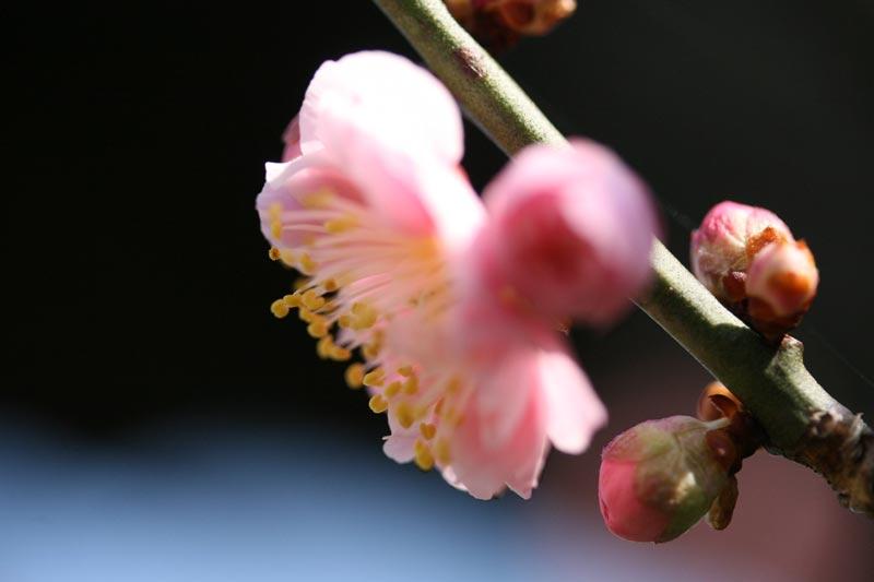 fuji20072.jpg
