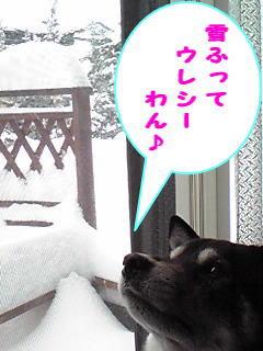 雪ふってウレシーわん